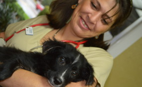 Angel Pup at the Vet being well cared for
