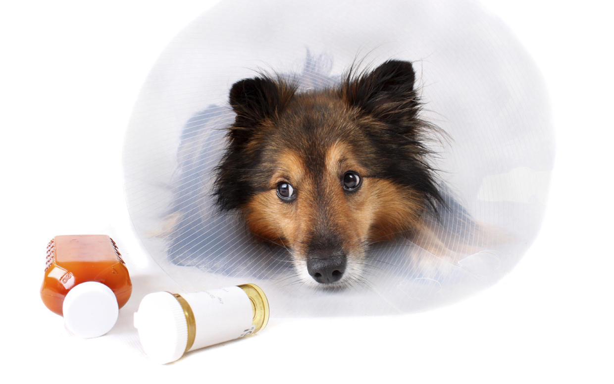 Save Money on Prescription Medications for Your Dog