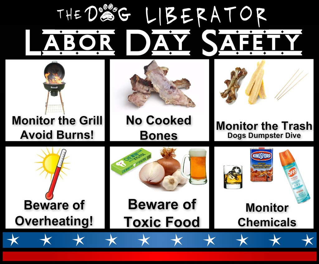 Help your Dog have a Safe Holiday!