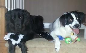 jake and cody share!