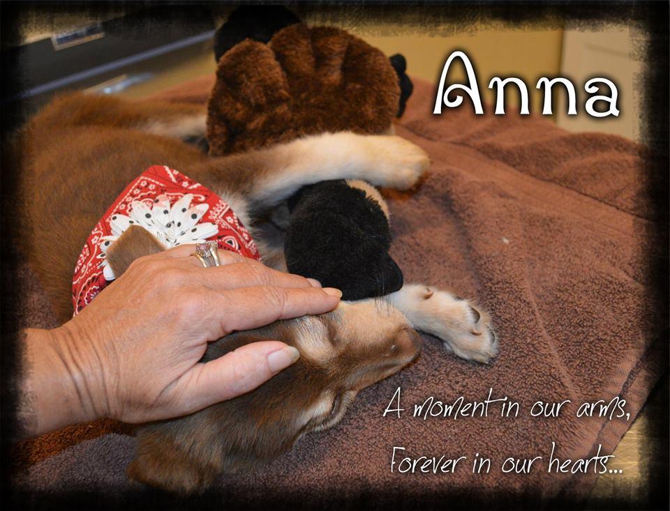 Anna~RIP