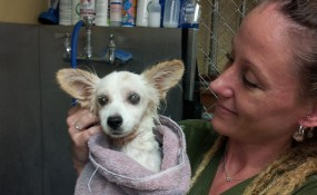 Carrie & Minnie after a bath!