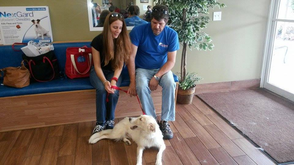 Lady Johannah, the lovely Collie mix! ~ Adopted!