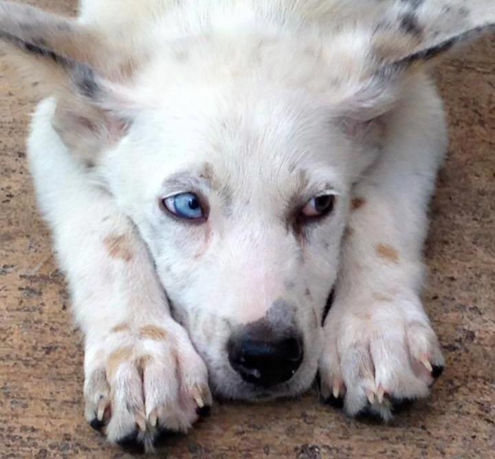 Ser Davos Seaworth~ Adopted!