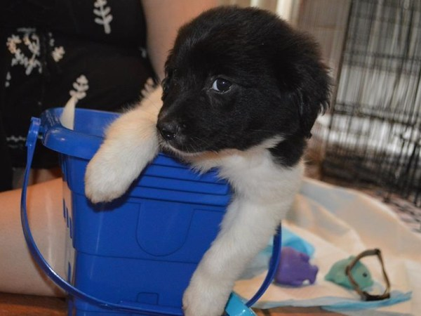 Treasure~Adopted!