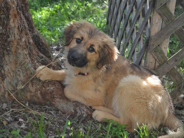 Brioso ~ Adopted!