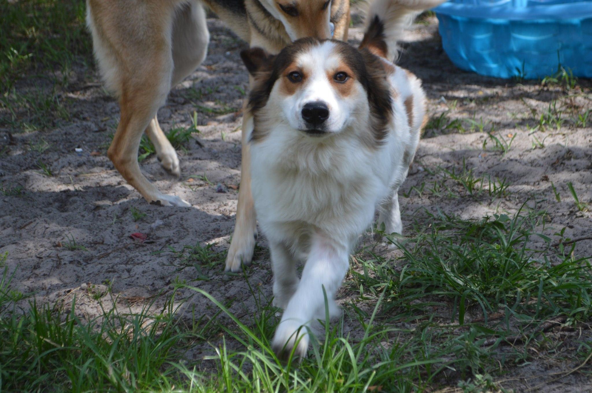 Baxter ~ Adopted!