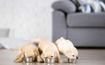 When to Stop Feeding Puppy Food?