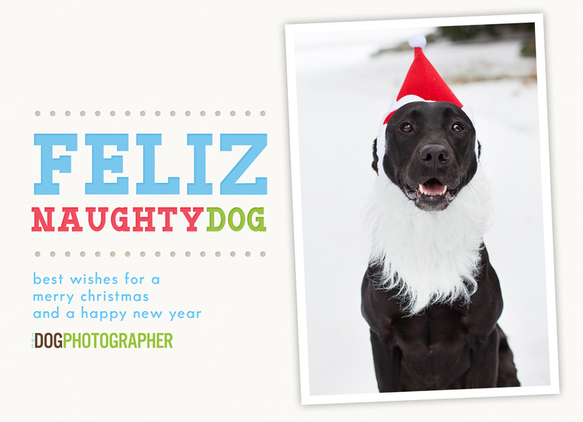Feliz Naughty Dog Gtgt Pet Portraits By The Dog