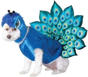 Animal Planet Peacock