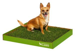 DoggieLawn Real Grass
