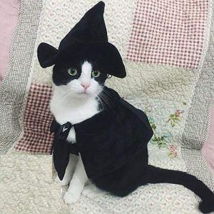 Lanyar Cute Hooded