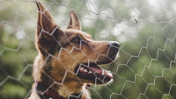 best wireless dog fences