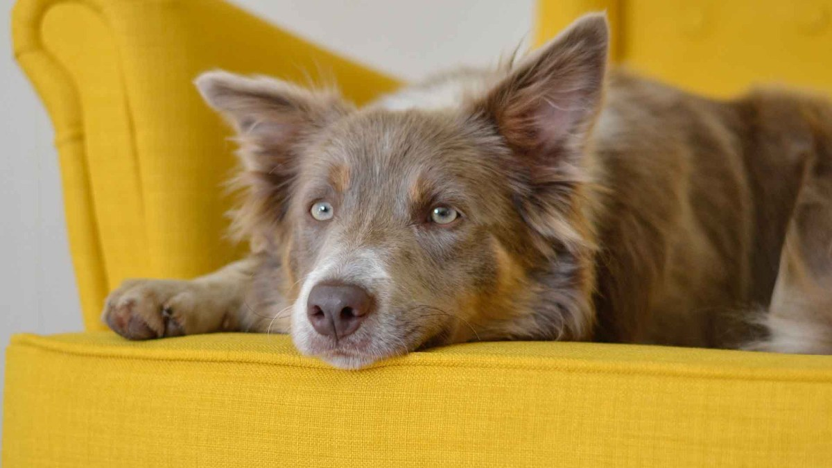 13 Best Couches For Dogs They'll Love  2021