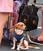 The Block Party was Dog Friendly. We Love That!