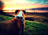 Romeo's Bucket List: Day 5- had a busy weekend, so today Mom took me to my favorite trail to watch the beautiful sunset