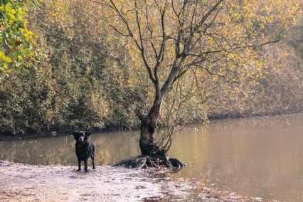 London Dog Walks on Wimbledon Common