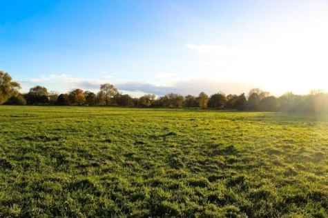 London Dog Walks - Barnes & Putney Commons