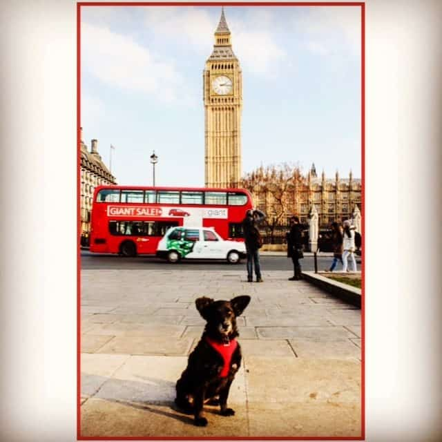 Wordless Wednesday Pawcards From London – Big Ben