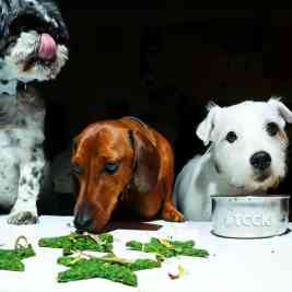 Curious Canine Kitchen Dogs Dinner
