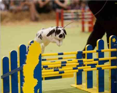 The London Pet Show - Rabbit Jumping