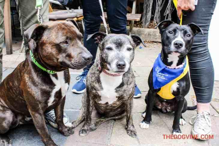 London Dog Events - PupIdol 2015