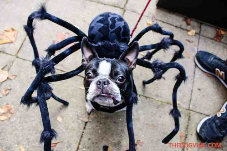 All Dogs Matter Halloween Walk 2015