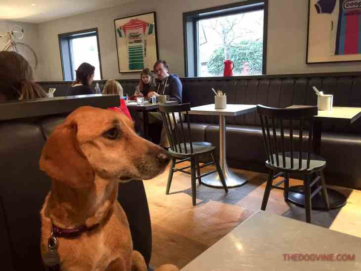The Dogvine Airbnb Insider Guide - The Dynamo Putney 2