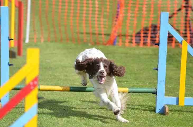 Festival of Dogs - London Dog Events