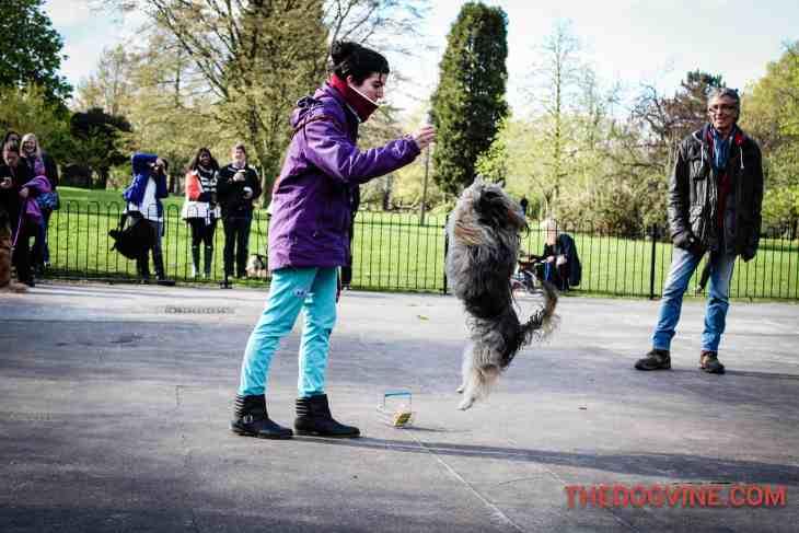 Gustavito - Dog Factor 2016