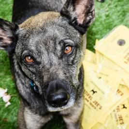 Beautiful Joes Ethical Dog Treats