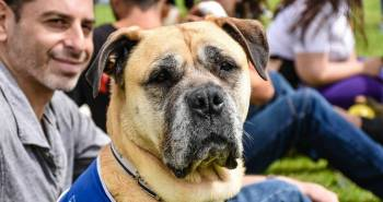 Hounds On The Heath Is A Barking Success For The Mayhew