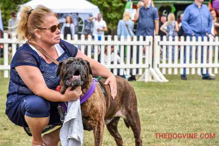 Pup Aid - Violet The Mastiff (now Piggy)