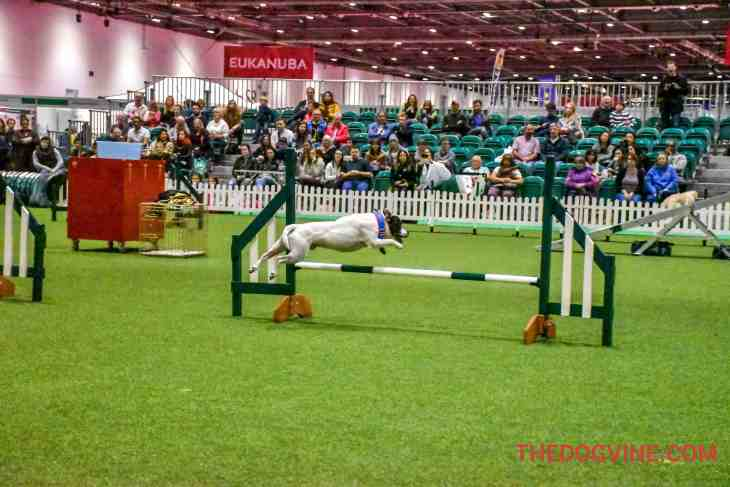 Discover Dogs 2016 - Agility