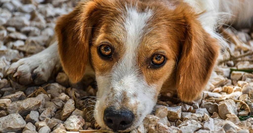 ARK Animal Rescue Kefalonia | Hope For 400 Stray Dogs & Cats