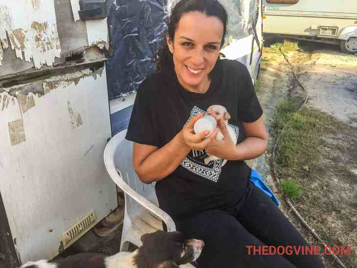 Animal Rescue Kefalonia Feeding Time