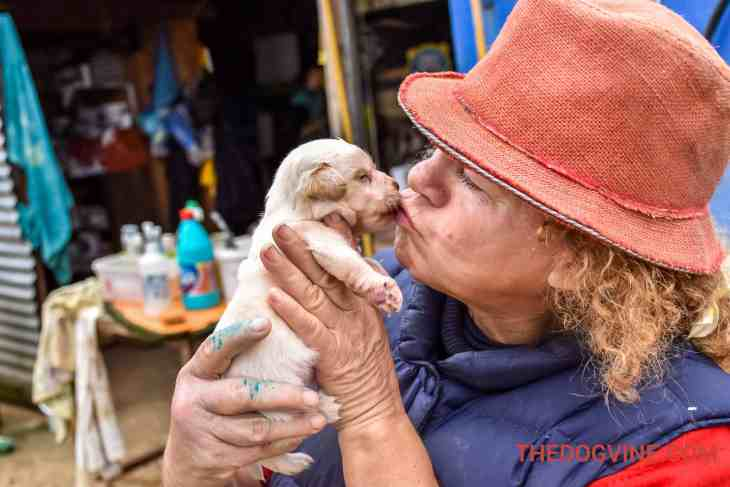 Animal Rescue Kefalonia Volunteering 4