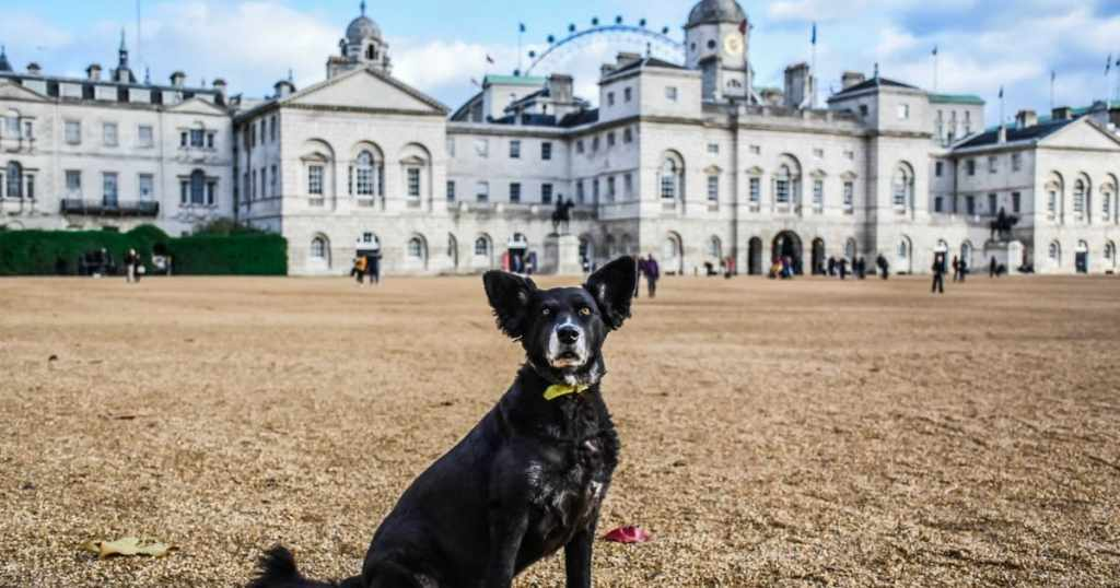 Don't Miss The New London Bus Tour For Dogs This Month