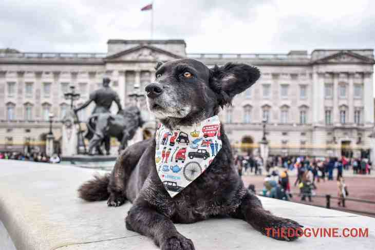 london-bus-tour-for-dogs-buckingham-palace
