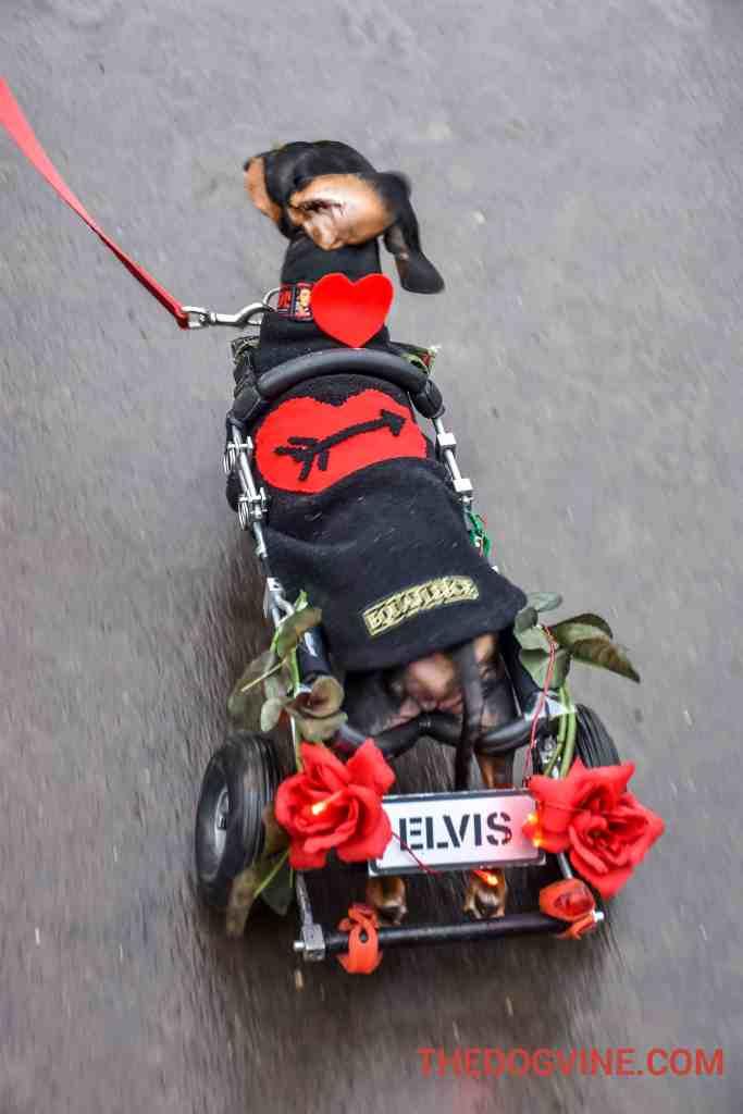 All Dogs Matter Valentines Walk 1