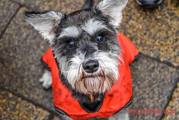 All Dogs Matter Valentines Walk-29