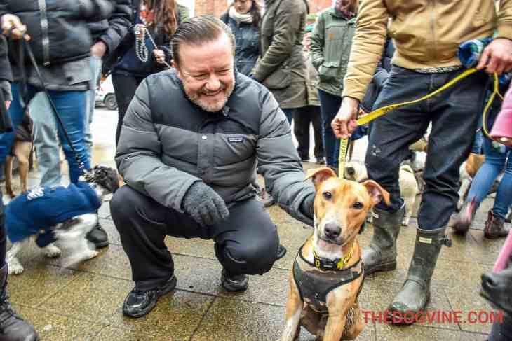 All Dogs Matter Valentines Walk 3