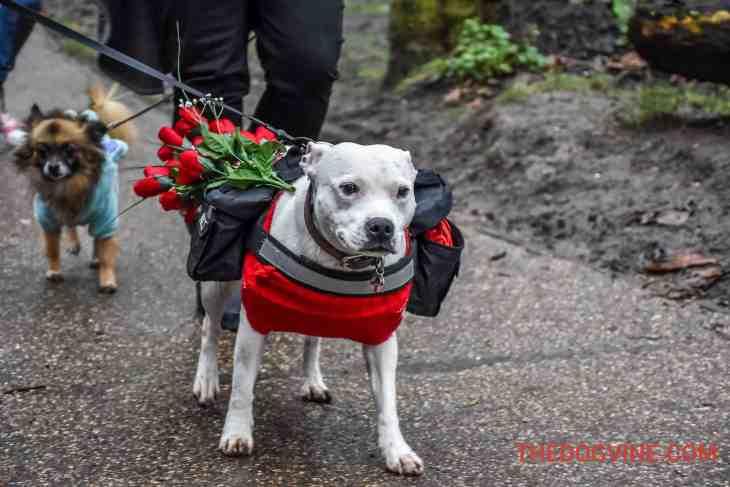 All Dogs Matter Valentines Walk-34