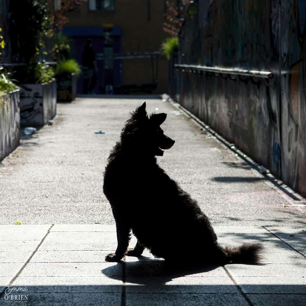 Belinha London Dog Photo Shoot with Emma OBrien_0048