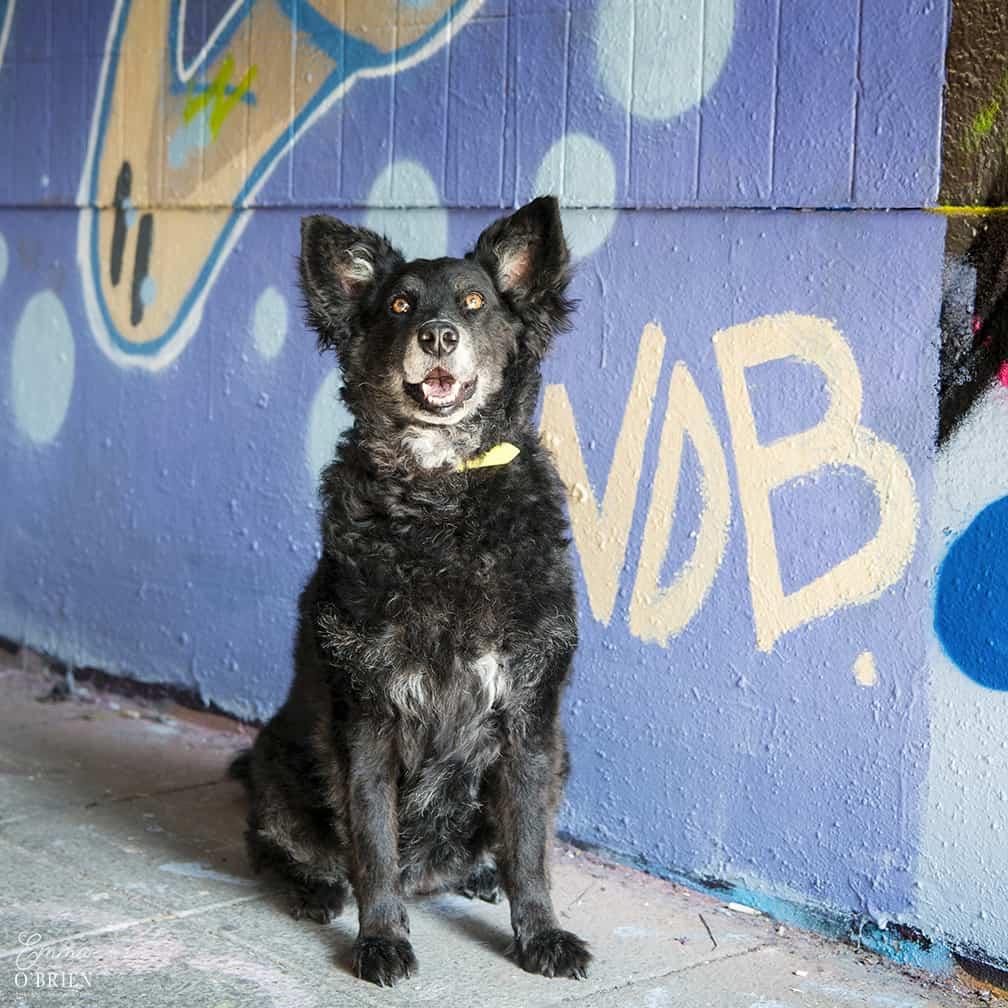 Belinha London Dog Photo Shoot with Emma OBrien_0060