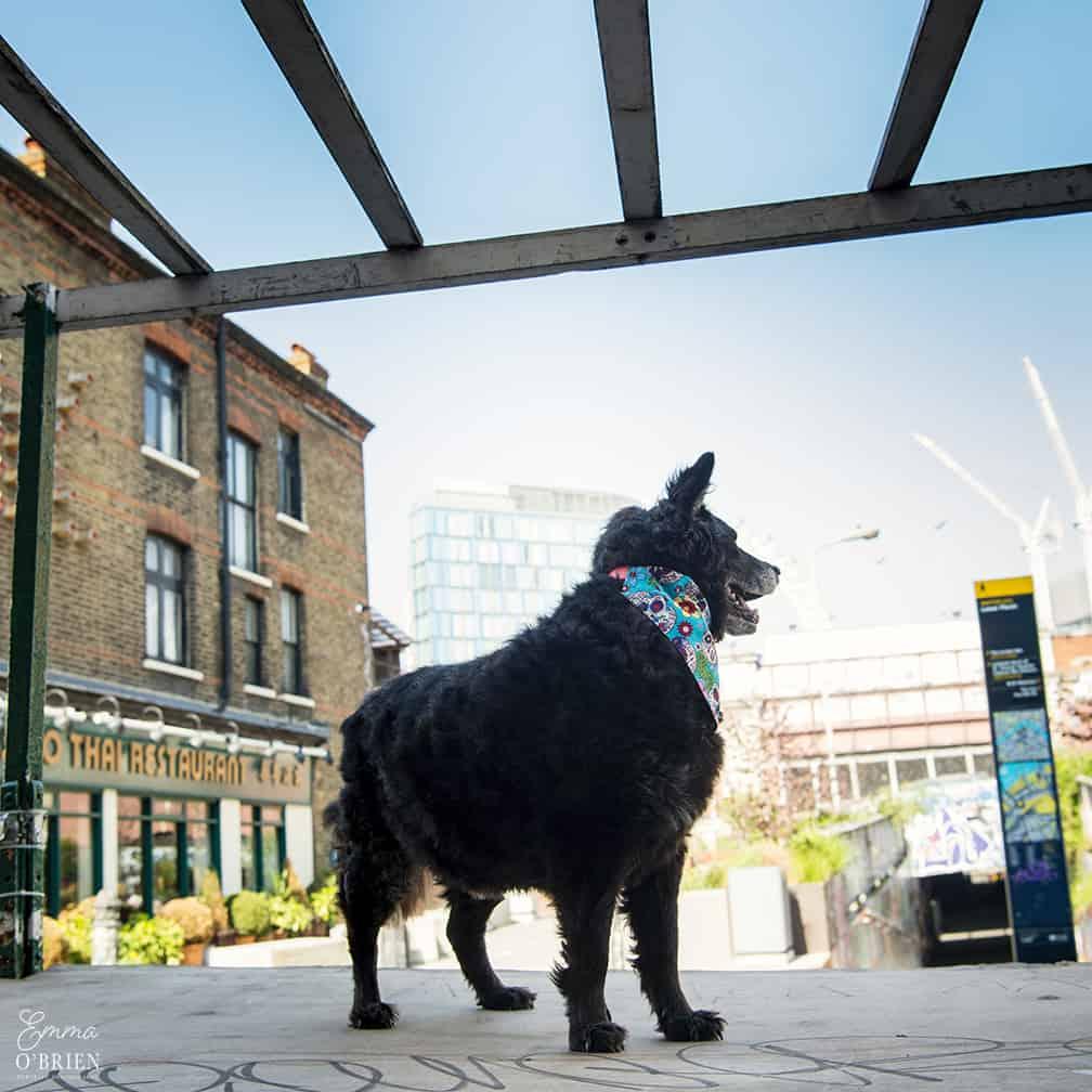 Belinha London Dog Photo Shoot with Emma OBrien_0111