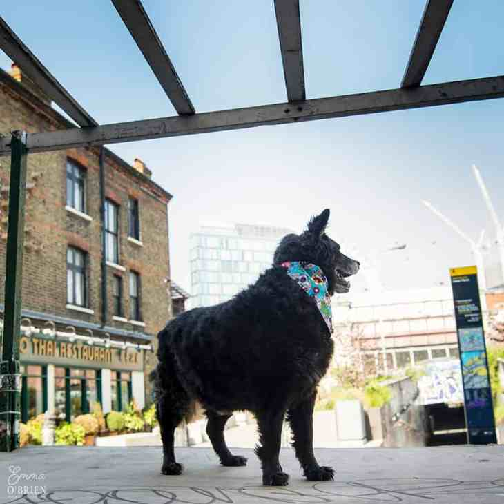 Belinha London Dog Photo Shoot with Emma OBrien_0111