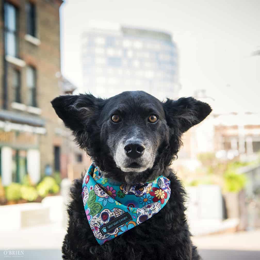 Belinha London Dog Photo Shoot with Emma OBrien_0125