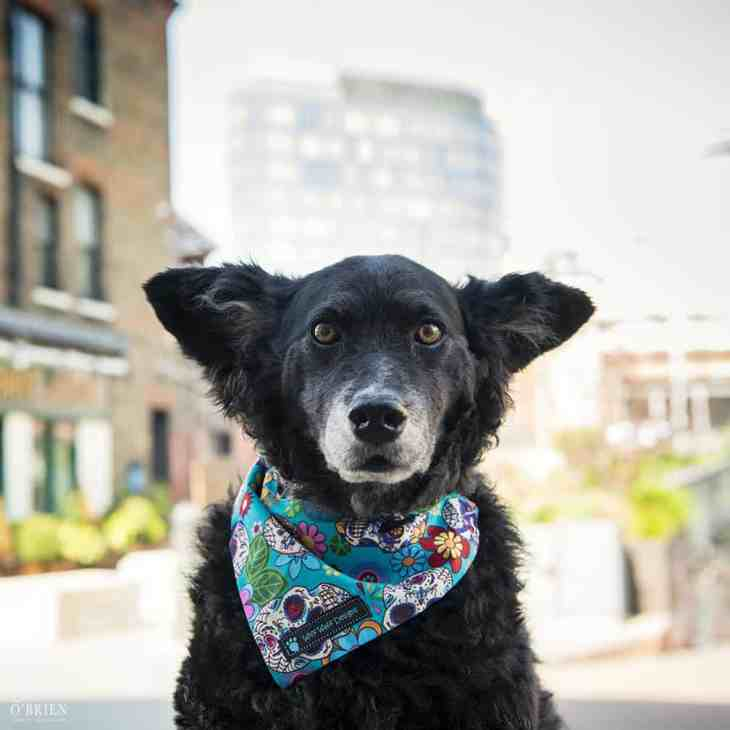 Belinha London Dog Photo Shoot with Emma OBrien_0125
