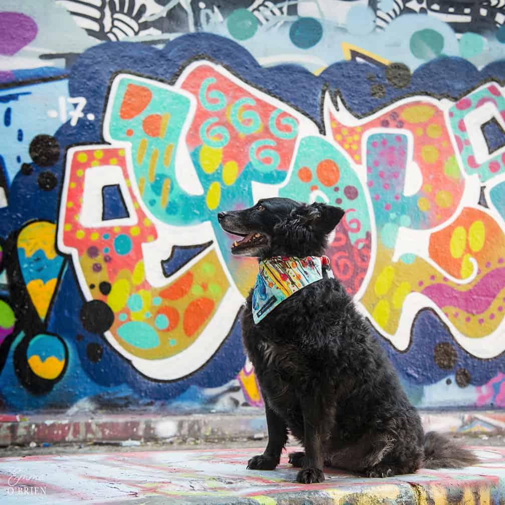 Belinha London Dog Photo Shoot with Emma OBrien_0138